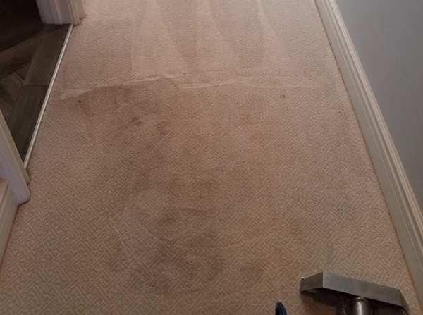 carpet in the process of being cleaned