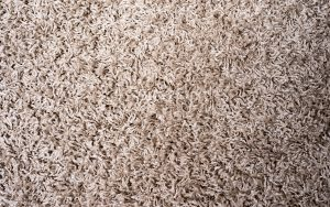What's Trapped in Your Carpet?
